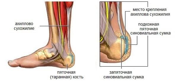 Место крепления ахиллова сухожилия