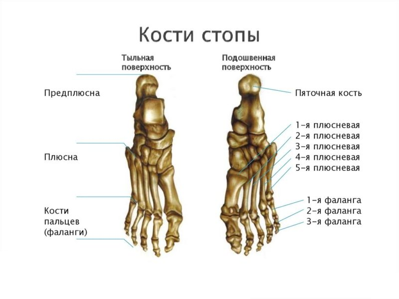 Как устроена стопа человека и каким патологиям она может быть подвержена